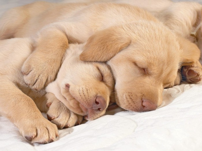 Animals_Dogs_Sleeping_puppies_014322_